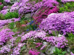 steingarten